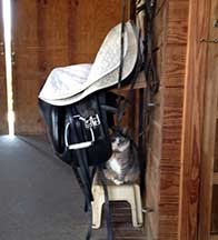 Sluggo hiding under my tack